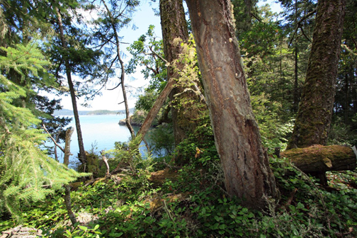Parks like East Sooke Park help make nearby residents happier and healthier. Photo by Logan C (flickr's LoganTech)