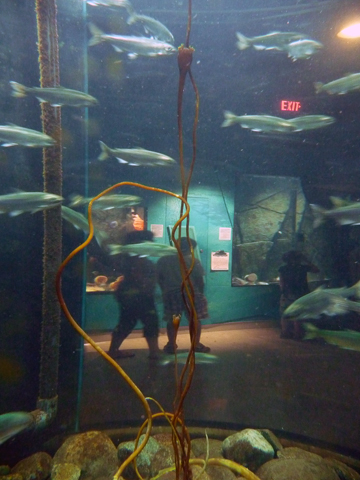 Through an aquarium at Shaw Ocean Discovery Centre, Sidney, B.C. Photo © Herb Neufeld, via flickr & creative commons