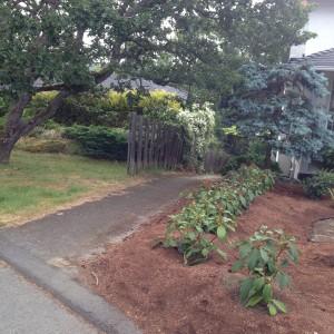 Gardenia Street pathway? or a private sidewalk to somebody's backyard?