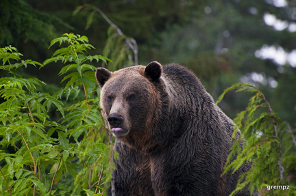 Grizz. Photo © Grempz, via flickr and Creative Commons