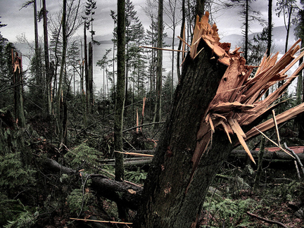Drought can make trees more vulnerable to windstorms, as occurred in late-2006 in Stanley Park. Photo © Hobvias Sudoneighm, via flickr and Creative Commons