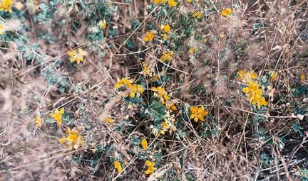 Drought-resistant. Photo © Yutaka Seki, via flickr and Creative Commons